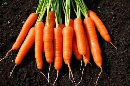 Cách xay sinh tố cà rốt