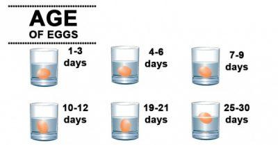 kiểm tra độ tươi của trứng với nước