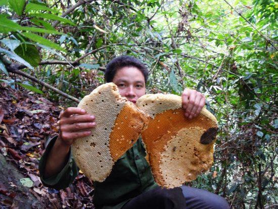 Mật ong rừng tây bắc nguyên chất xịn 100%