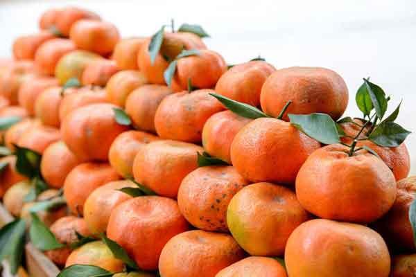 Cách nhận biết cam canh Việt Nam và cam canh Trung Quốc