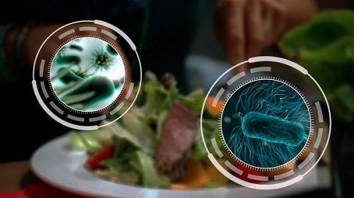 Nhiều loại vi khuẩn gây ngộ độc thực phẩm
