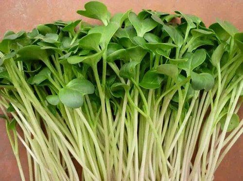 lợi ích của rau mầm thảo dược methi