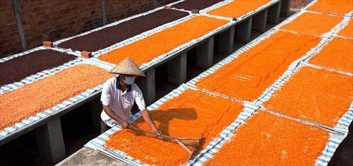 quy trình sản xuất muối tôm tây ninh