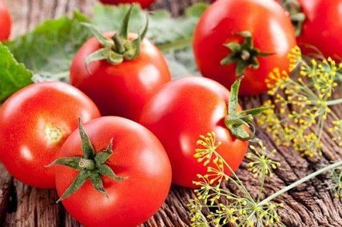 Cà chua Hà Lan