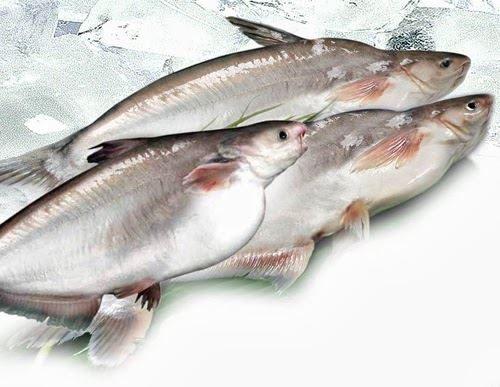 Cá dứa biển được nhiều người ưa chuộng
