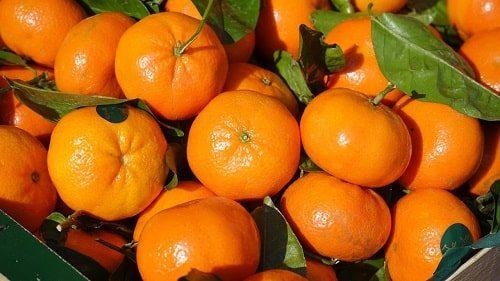Cung cấp cam canh ngon, chất lượng tại Hà Nội và Hồ Chí Minh