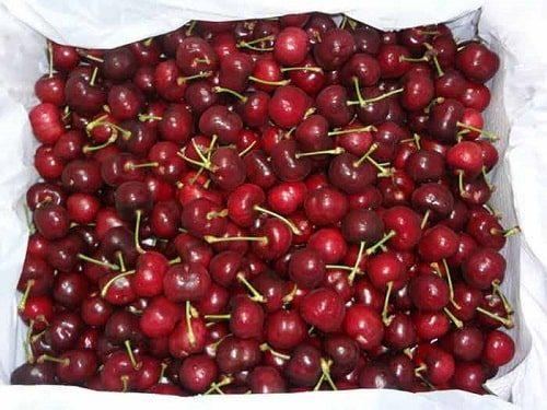 Mua cherry tại Hà Nội và Hồ Chí MInh