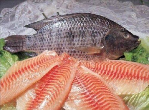 lợi ích khi ăn cá rô phi
