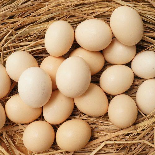 trứng gà ác