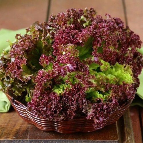 trồng rau xà lách tím