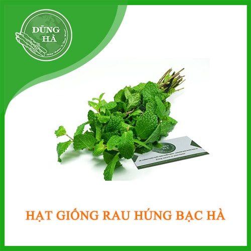 hat giong hung bac ha