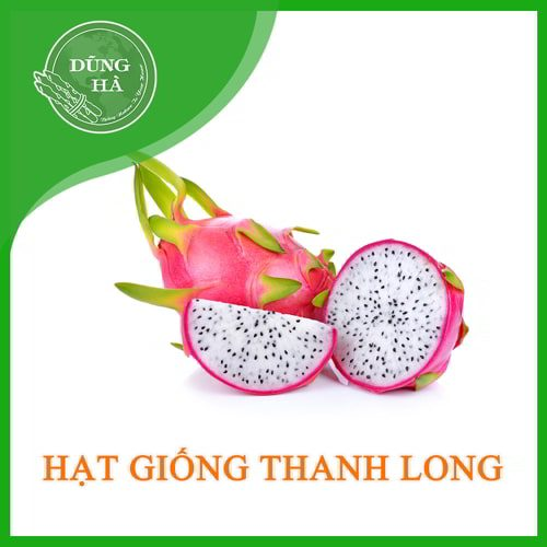 hat giong thanh long