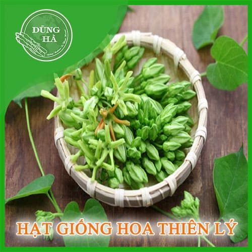 hat giong hoa thien ly