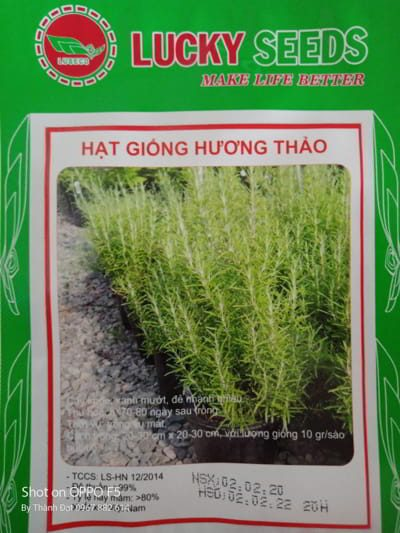 hat giong huong thao